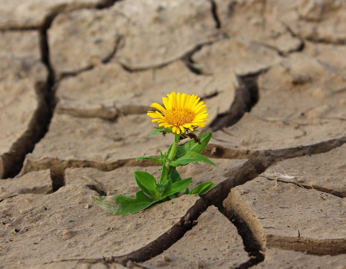 How Are You Cultivating Resilience in Your Life